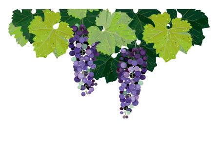 Winery Oak Tree