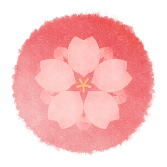 Sakura 24