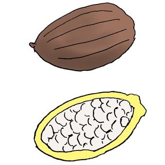 Cacao fruit