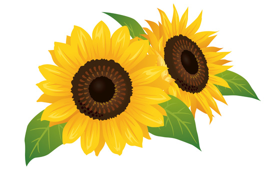 Summer flower · Sunflower (sunflower) Icon 02