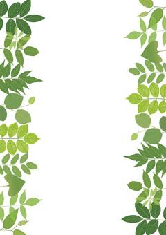 식물 양쪽