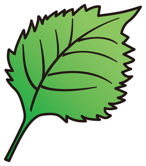 Azuma's leaf B_v 8