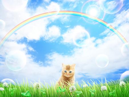 Grass White Alpine Grass Blue Sky Rainbow Cat Background Wallpaper
