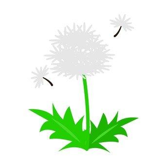 Dandelion (fluff)