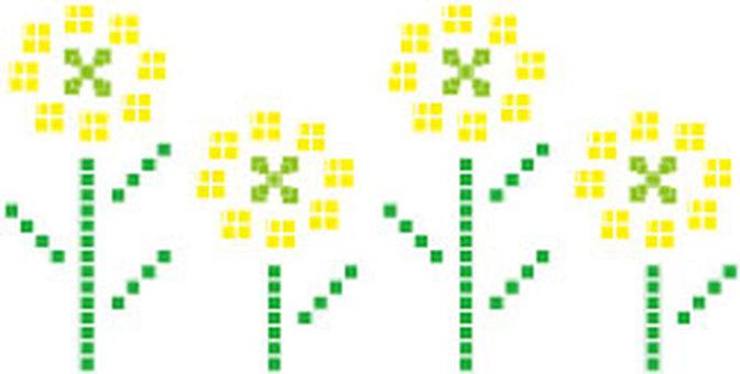 Rape blossoms 4