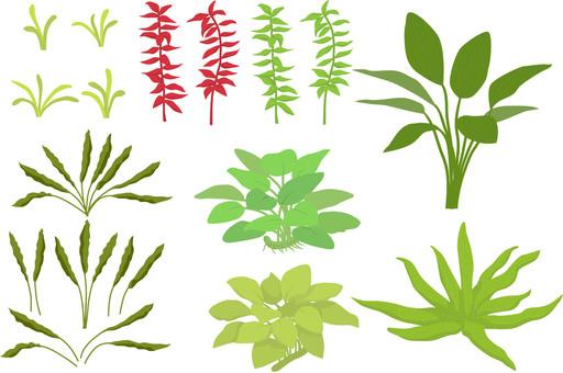 Several kinds of aquatic plants