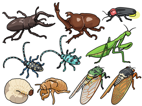 Animal_insect_set 1_with行