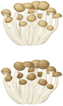 Shimeji / mushroom