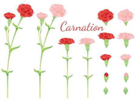 Carnation set