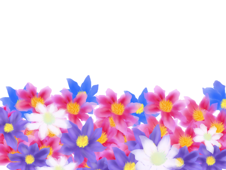 鐵線蓮屬花