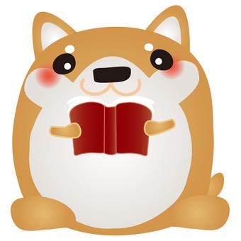Shiba inu reading