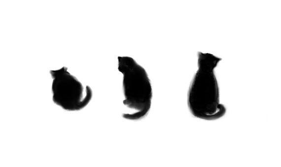 Cat feeling