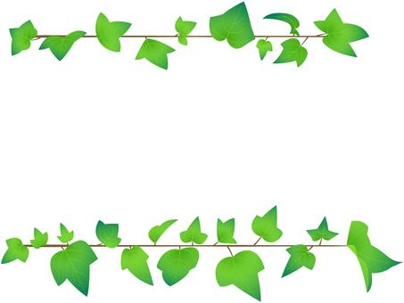 Linear Ivy