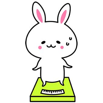 Weight scale rabbit diet weight gain weight