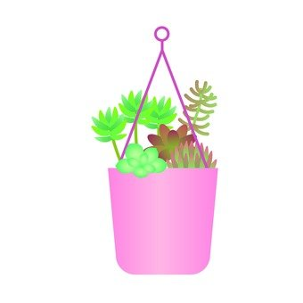Houseplant plant - Succulent succulent planting (hanging pot)