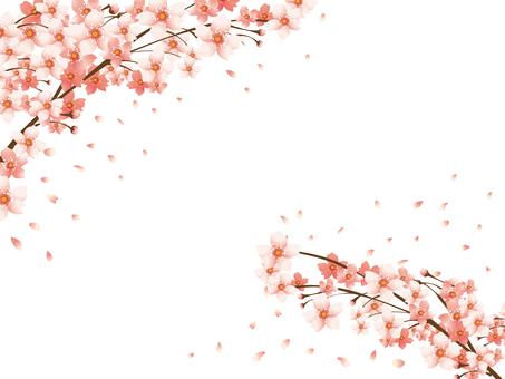 桜の背景素材