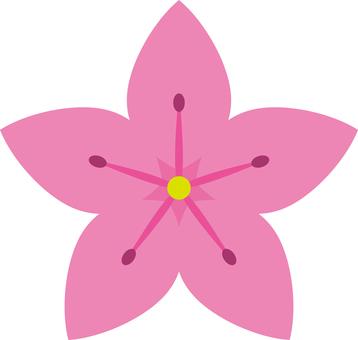Flower azalea