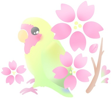Parakeet and cherry tree (Sakuragi main version)
