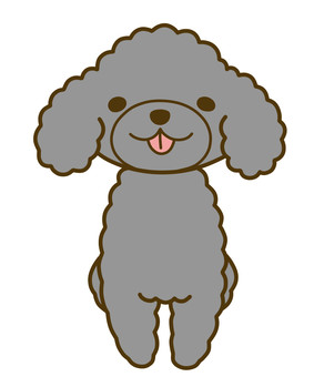 Toy poodle silver