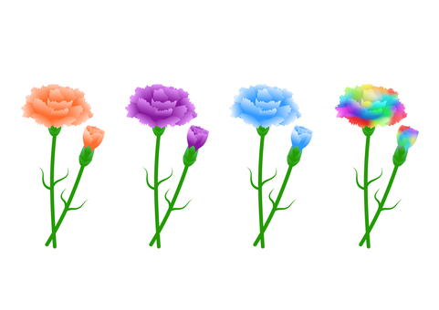 Carnation (orange, purple, blue, rainbow color)