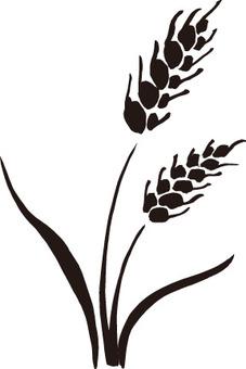 小麥剪影材料
