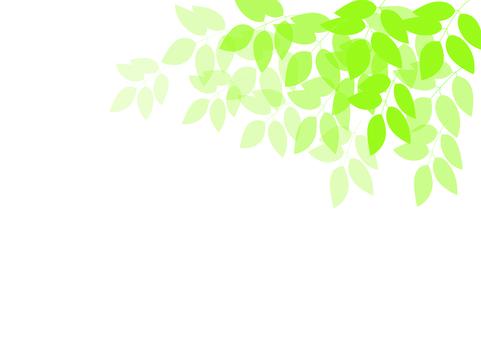 초여름의 새잎 1