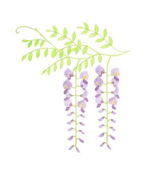 Watercolor wisteria