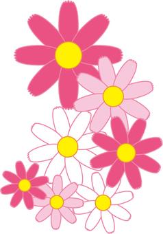 코스모스 꽃
