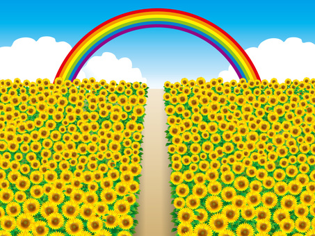 Sunflower field (12) Tunnel and one road and rainbow