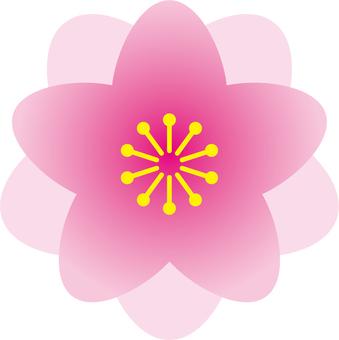 복숭아 꽃 (2)