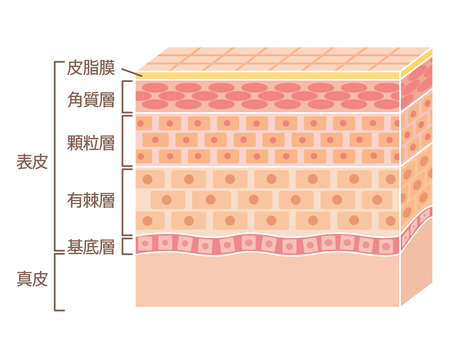 Skin skin structure
