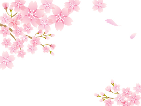 200127.Sakura 8