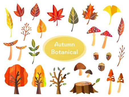 Autumn plants