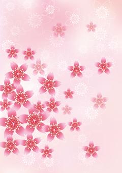 벚꽃의 꽃 49