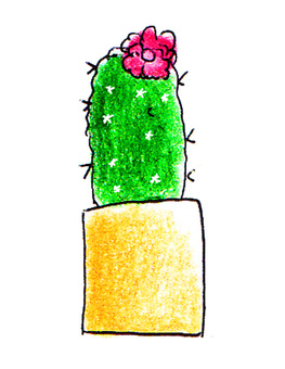 Cacti with blossoming flowers