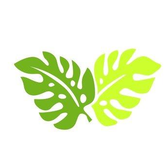 Hawaiian plant 12