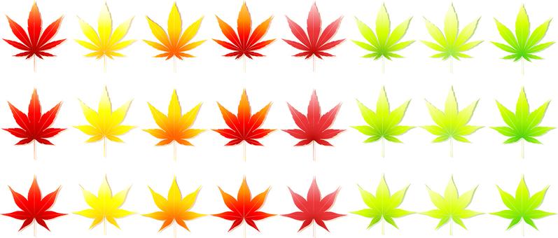 艾葉與葉影集的楓葉