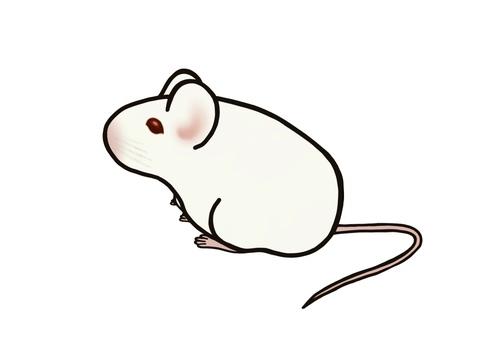 動物実験シルエット イラストの無料ダウンロードサイトシルエットac