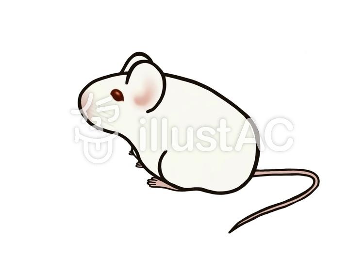実験 動物 ねずみ マウス 白イラスト No 1232926無料イラストなら
