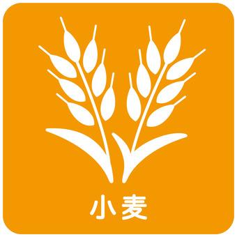 Food allergy / wheat