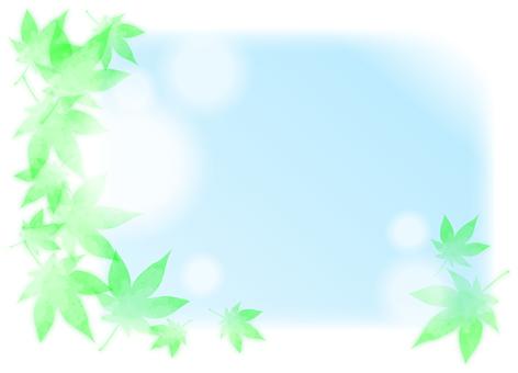 여름 단풍 3