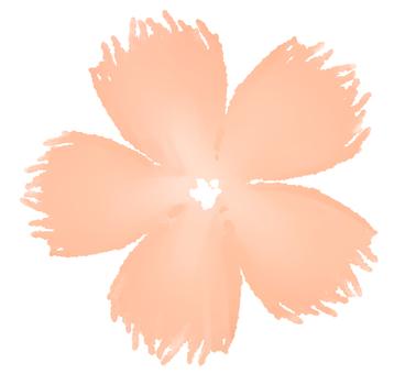 패랭이 꽃 바람 꽃