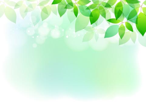 Fresh green material178