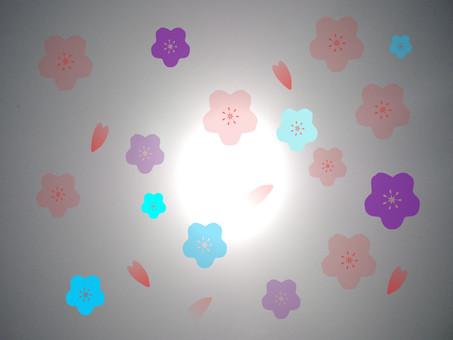 櫻花在光線中,跳舞的花瓣