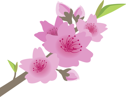 Peach Mei 桜