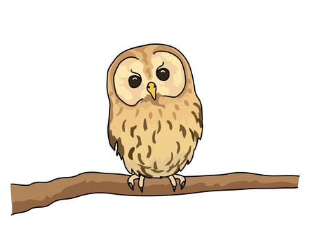 Mori owl