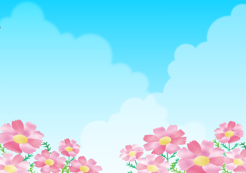 Cosmos under the blue sky background