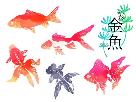 Watercolor goldfish
