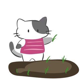 貓的水稻種植