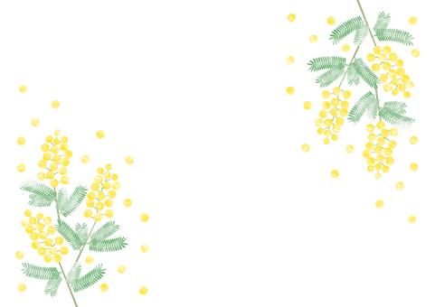 Mimosa background